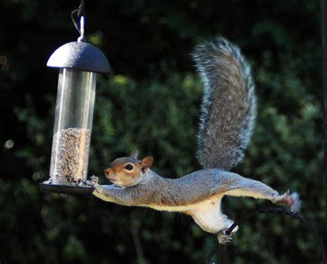 bird feeders are a squirrel s best friend