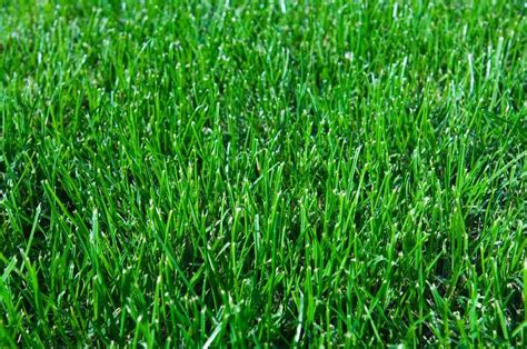 Bermuda Lawn Care Tips