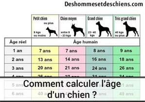 comment calculer l 226 ge d un chien des hommes et des chiens