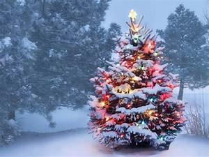 Weihnachtsbeleuchtung Für Draußen : weihnachtsbeleuchtung schafft stimmung ~ Michelbontemps.com Haus und Dekorationen