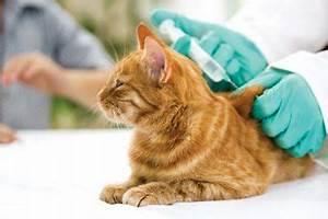 Flöhe Bei Katzen Bekämpfen : katzen tipps zum schutz vor parasiten ~ Orissabook.com Haus und Dekorationen