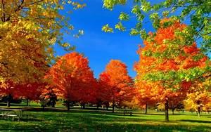 Autumn, Fall, Season, Nature, Landscape, Leaf, Leaves, Color, Seasons, Tree, Forest, Wallpapers