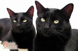 Black Cats | Catnip Camera  Black