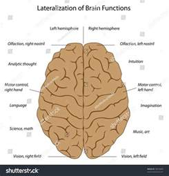 Right Brain Left Hemisphere Functions