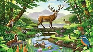 Real Jungle Animals Wallpaper Wwwpixsharkcom Images