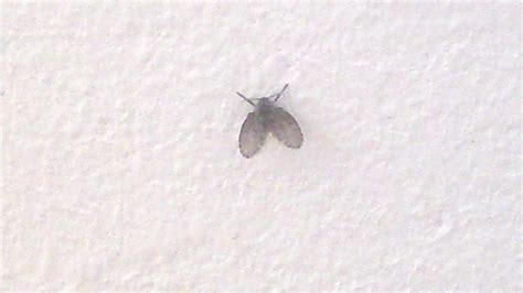welche mottenart ist das insekten bestimmung