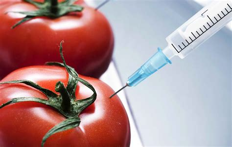 Modification Genetic Organisms the controversy surrounding genetically modified organisms