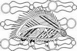 Coloring Aboriginal Colouring Pages Animals Indigenous Symbols Dreamtime Leech sketch template
