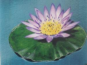 Water Lily Paintings And Photos