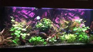 Aquarium Led Beleuchtung : led beleuchtung f rs aquarium youtube ~ Frokenaadalensverden.com Haus und Dekorationen