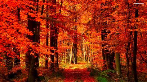 Orange Fall Wallpaper by Orange Forest Wallpaper Hd 25806 Baltana