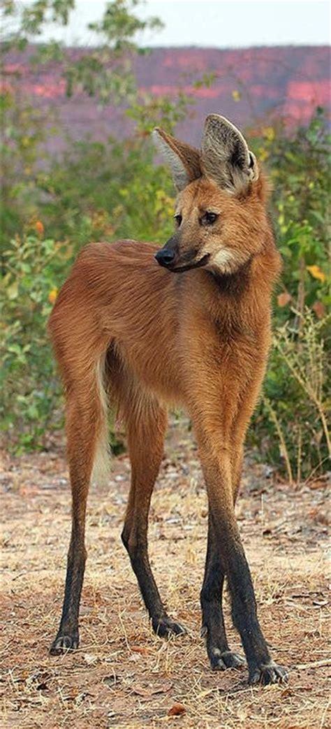 pin  amazing wildlife