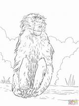 Baboon Coloring Pages Drawing Chacma Baboons Printable Results Angry Getdrawings Categories sketch template