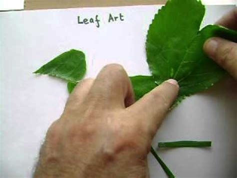 ls made from leaves how to create simple leaf art showing a bird youtube