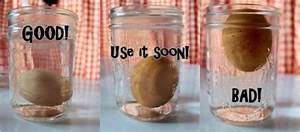 Floating Eggs Science Project Ideas