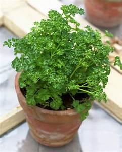 Kräuter Pflanzen Topf : kr uter pflanzen balkongarten mit duftenden topf kr utern ~ Lizthompson.info Haus und Dekorationen