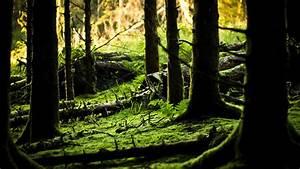 terralonginqua:... Forest Floor Quotes