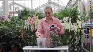 Rempoter Une Orchidee : comment bien rempoter une orchid e youtube ~ Mglfilm.com Idées de Décoration