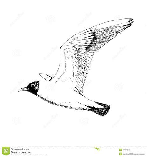 Drawn Seagull Pencil And In Color Drawn Seagull