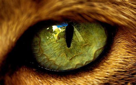 tiger eye animal eyes close up tiger eye 1024x640 drawings pinterest tigers animal and cat