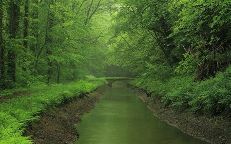 Forest River Wallpaper  Hd Backgrounds Pic