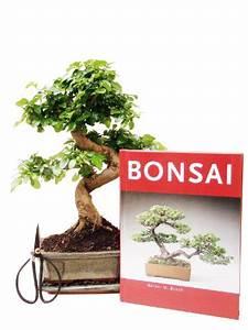 Bonsai Pflege Für Anfänger : bonsai f r anf nger test gartenbau f r jederman ganz einfach november 2018 ~ Frokenaadalensverden.com Haus und Dekorationen