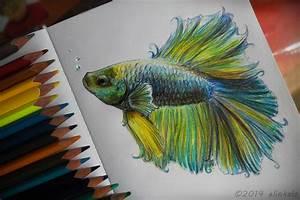 Drawn fish beta fish - Pencil and in color drawn fish beta ...