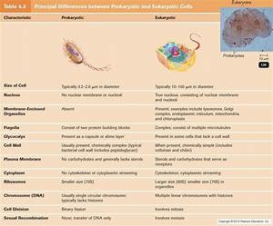 Principal Differences Between Prokaryotic And Eukaryotic