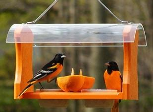 wild birds unlimited  place  hang oriole feeder