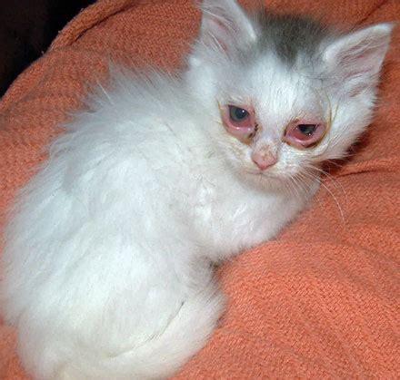 Top Ten Worst Cat Illnesses (diseases