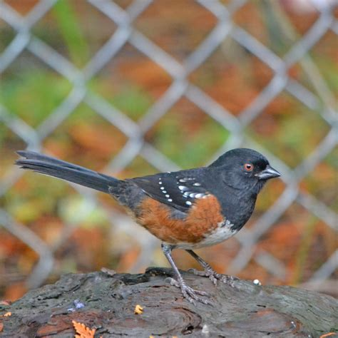 Kristi Bowman Design Wbw Backyard Birds