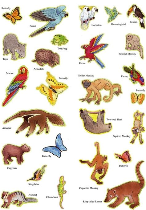 flying clipart air animal flying air animal transparent