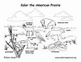 Prairie Coloring Habitat Pages Habitats Animal American Biome Animals Biomes Dog Grassland Science Desert Map Worksheet Exploringnature Drawing Printable Draw sketch template
