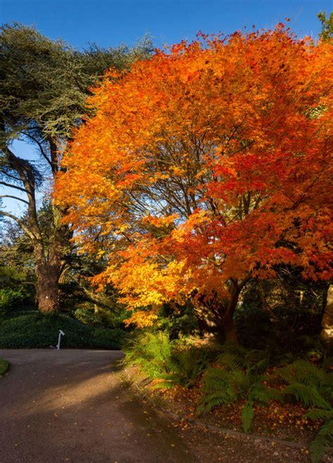 grounds waddesdon manor