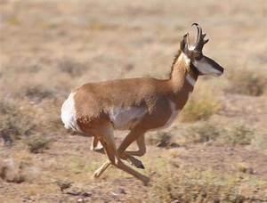 Top 5 Fastest Land Animals - Boldlist