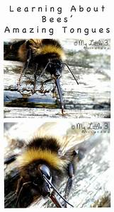 Honey Bees  Jehovah And Honey On Pinterest