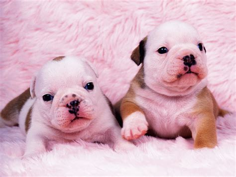 baby puppies puppy gallery pictures