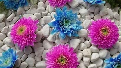 Bunga Cantik Flowers Wallpapers Flower Laptop Gambar