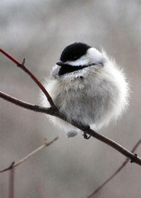 wild birds unlimited  birds survive cold weather