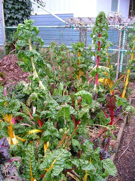 oregon coast gardener winter vegetable gardening   coast