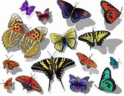 Happy Colorful Creation Photoshop Butterflies Wildlife God