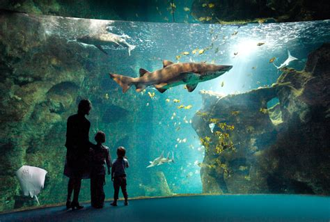 chambres d hotes sables d olonne aquarium de la rochelle quand il pleut les sables d