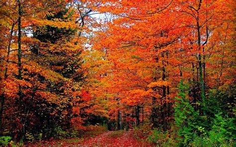 fall color fall autumn colors bell rehwoldt
