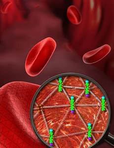 The Amazing Flexibility Of Red Blood Cells
