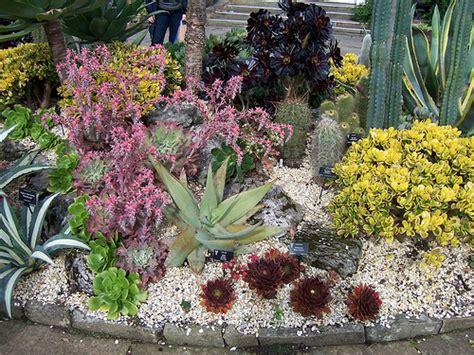 succulents outdoors outdoor succulent bed at birmingham botanical gardens birmingham branch bcss autumn show