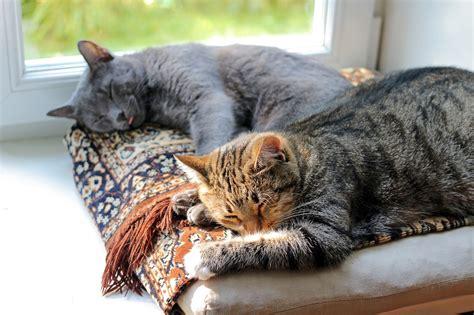 katze an neue besitzer gewöhnen 5 tipps neue katze zieht ein katzen erfolgreich