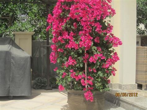 outdoor flowers outdoor plants 171 desertfragrance com