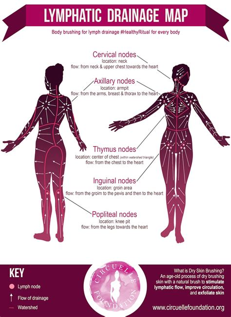 Lymphdrainagemap Circuellefoundationsmall Health
