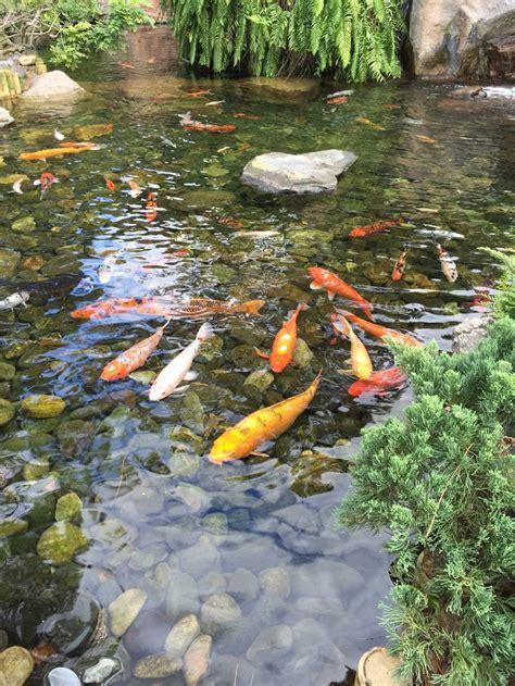japanese gardens koi ponds google search ponds