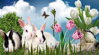Spring Easter Wallpapers Bunny Desktop Rabbits Bunnies